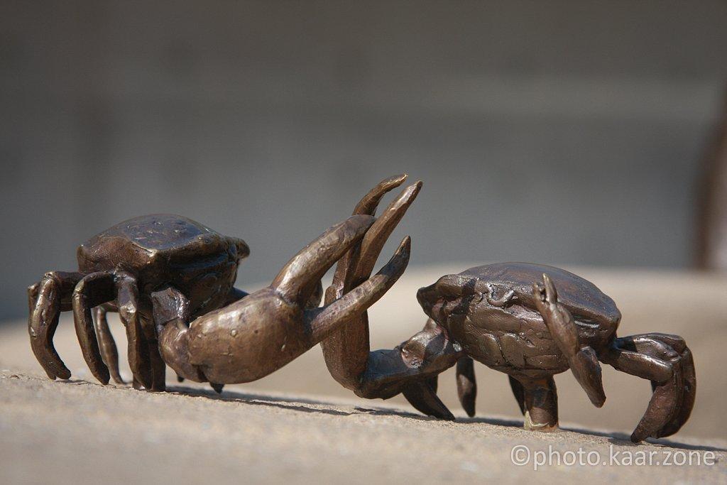 Fiddler Crabs