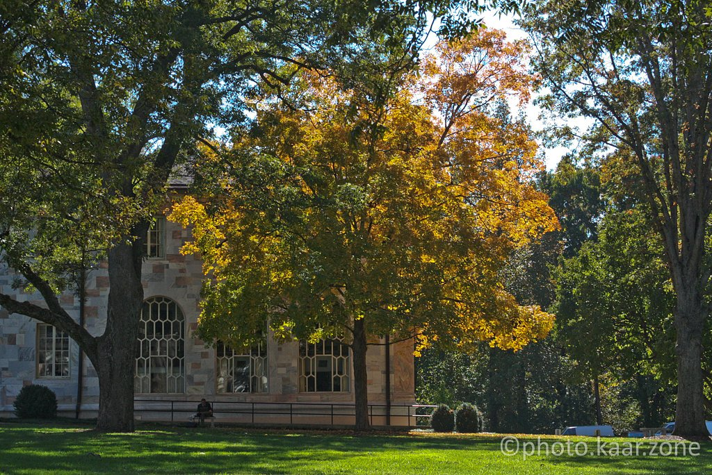 Fall at The Quad